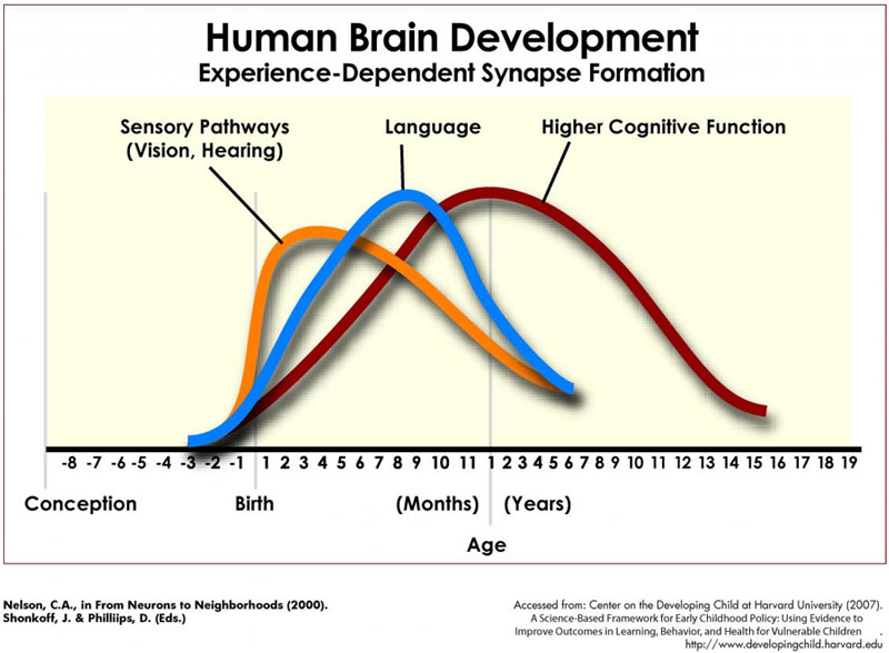 Human Brain Development Chart